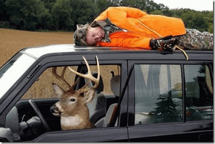 Killer Deer