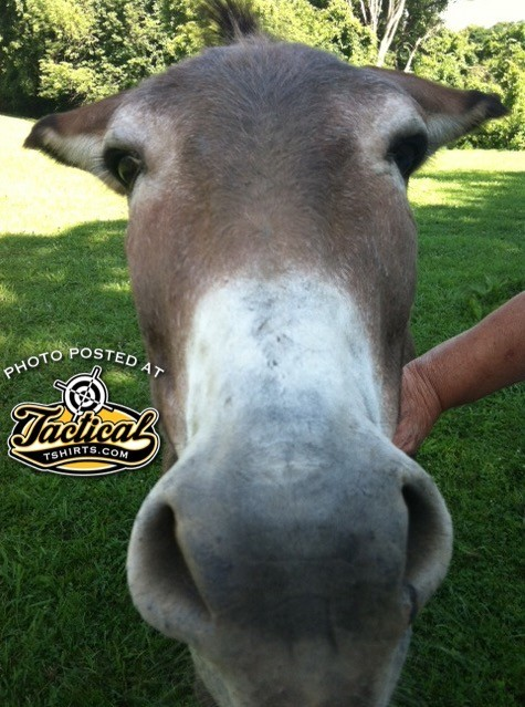 Crackerjack, the company Donkey. Yes, He's real.