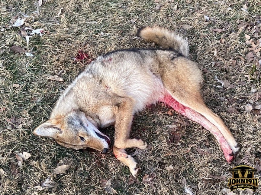 Coyote hunting. Depredation hunting. Tags.