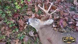 Freeze's 11-Point Buck. Shot with a Vepr 12