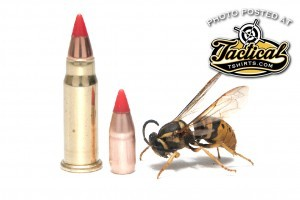 The tiny 17 Mach 2 cartridge may the small, but it still packs quite a sting.