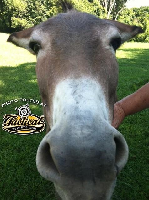Crackerjack, the company Donkey. Yes, He's real.