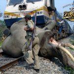 POTD — Elephant Hit By Train