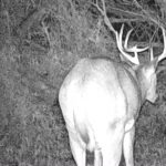 Trail Cam Bucks Opening Week 2019 John1911 Range