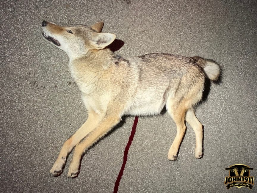 The Coyote Wars