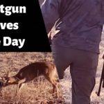Shotgun Saves The Day