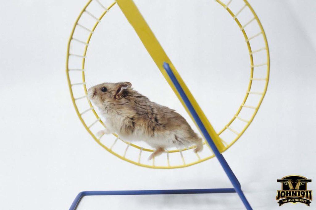 The Gear Queer Hamster wheel