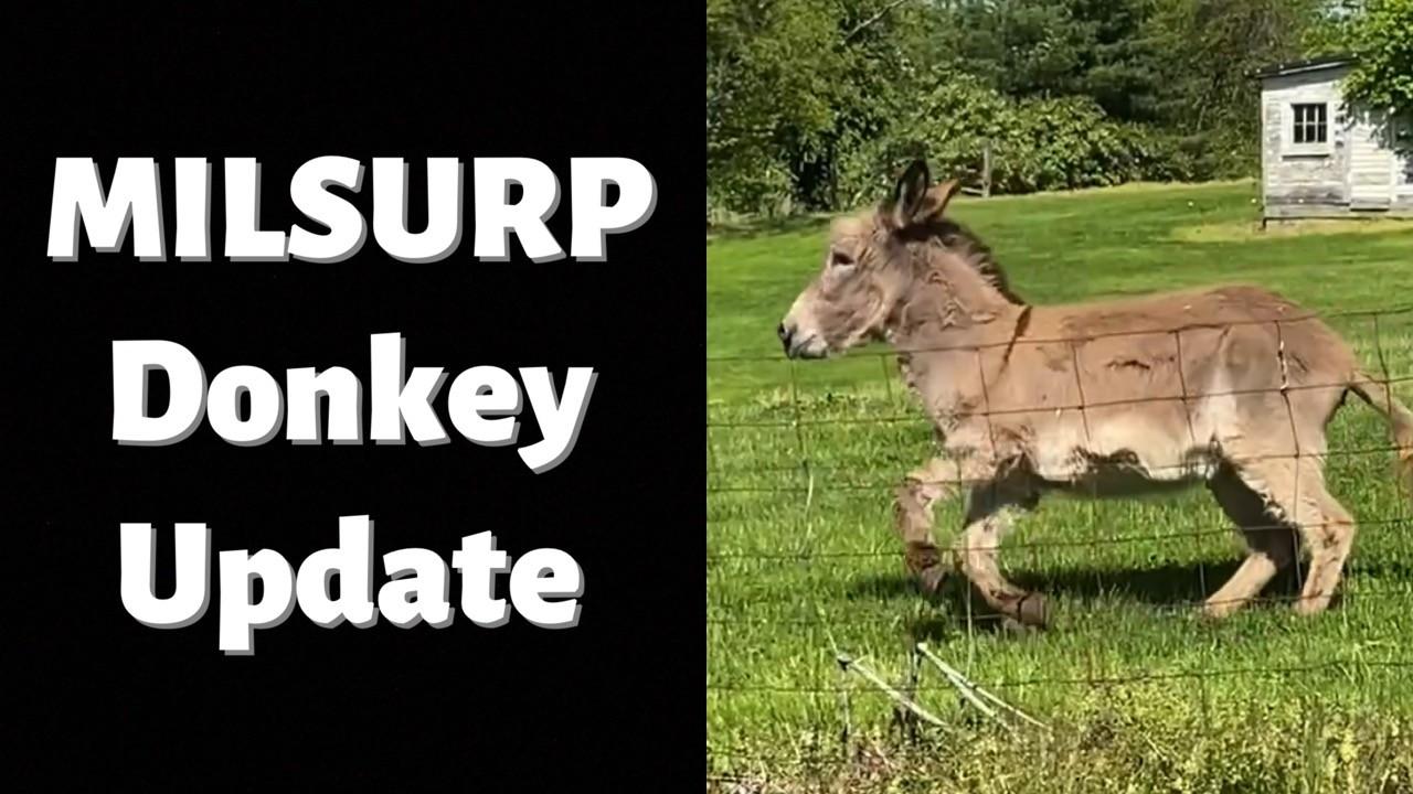 Government Donkey